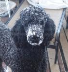 viv snow face