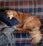 Ike sleeping